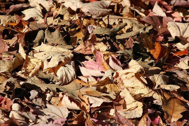 autumn leaves winter mulching perth