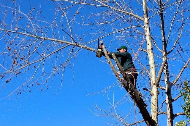 perth gardener tree trimming chainsaw