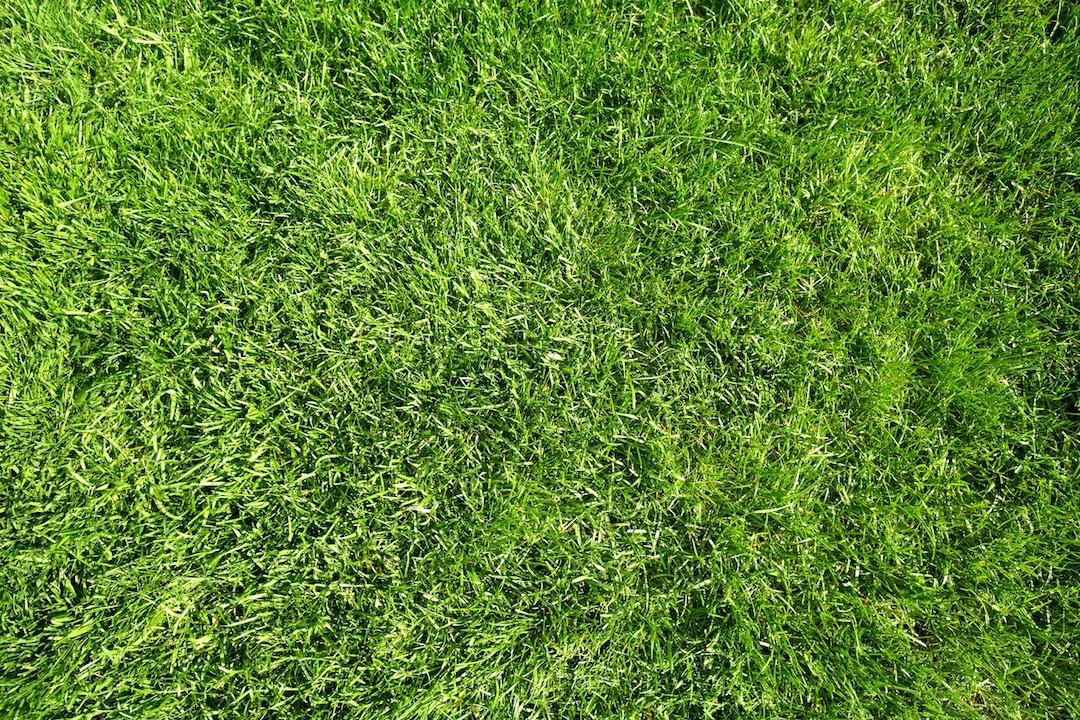 Freshly mowed lawn in Bicton