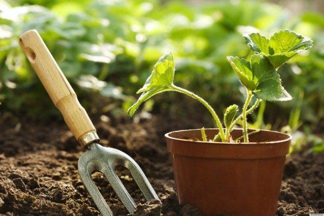 gardening tools garden fork plant