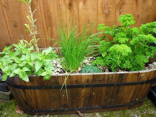 Gardening Tips for September