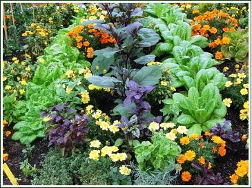 Companion Planting Perth Flowers Vegetables Amp Herbs