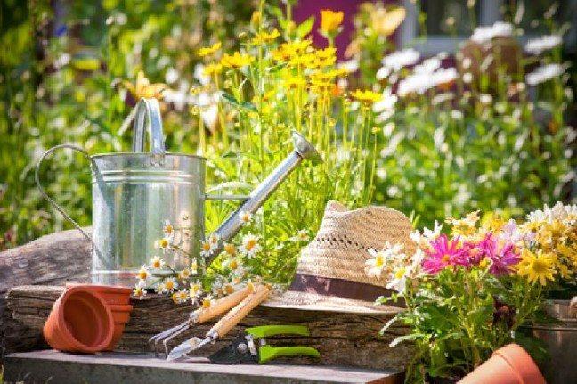 Gardening tips for Perth gardeners
