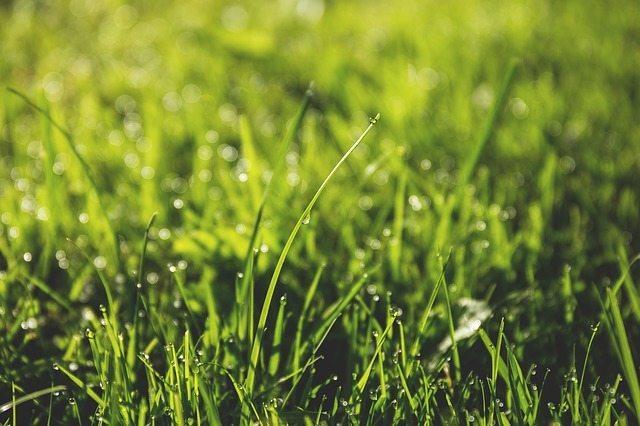 topdressing lawn perth