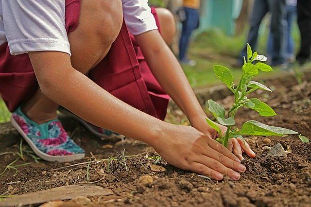 planting tree dirt soil checking