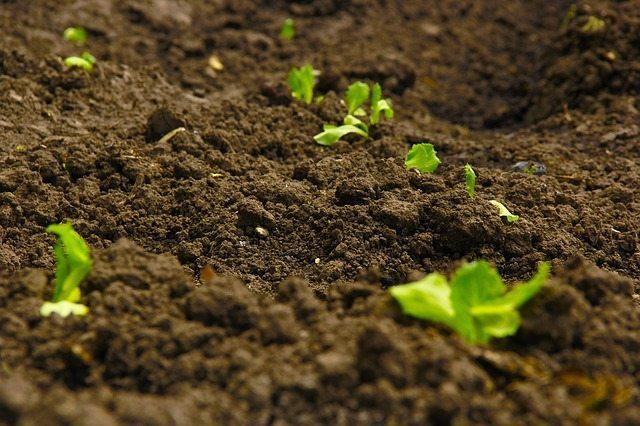 soil growing plant seedlings Perth