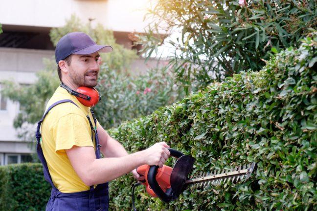 Hedge Maintenance Perth