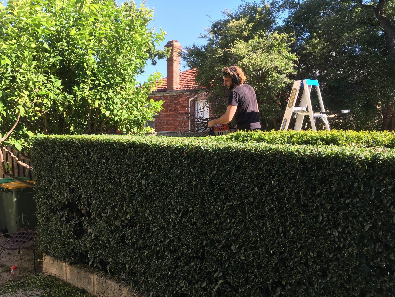 gardener trimming hedge in Perth garden