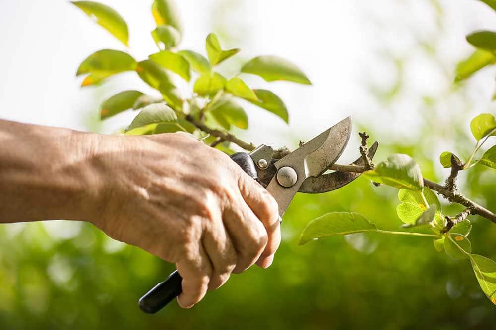 Best Garden Tool collection