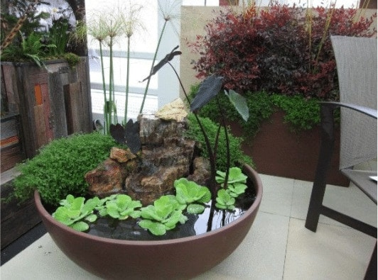 planting a large bowl with low maintenance