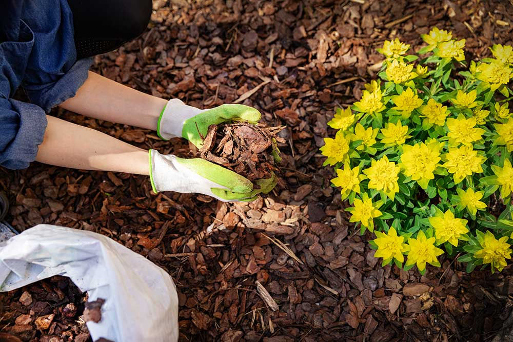 Professional Mulching services in Perth