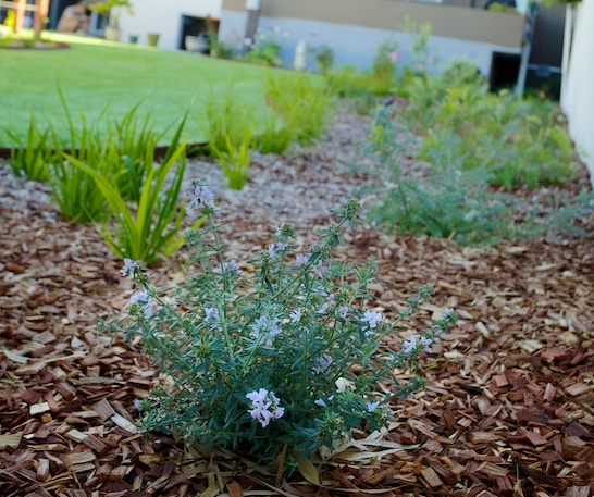 Importance of Weed Management – Ways to Control It