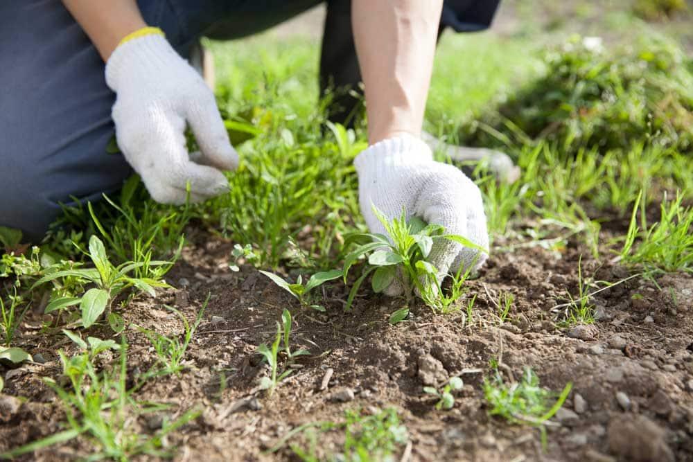 Garden weeding services in Perth